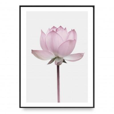 Plakat | Lotus 1