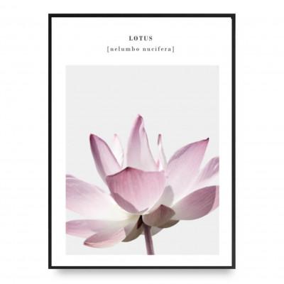 Plakat | Lotus 4