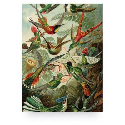Wall Print on Wood Exotic Birds
