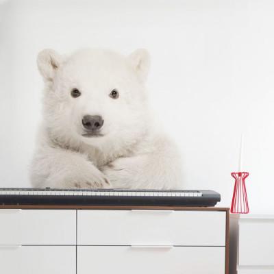 Wandaufkleber   Eisbär