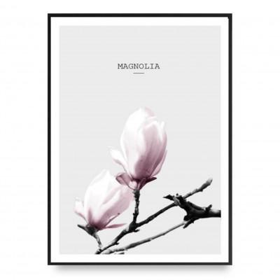 Poster | Magnolia Pink