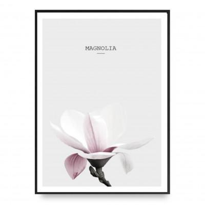 Poster | Magnolia Pink 2