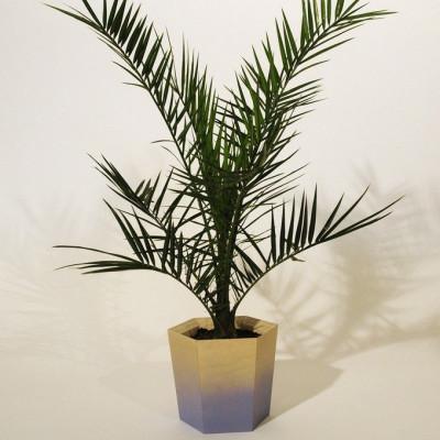 Sechseckiger Pflanzentopf   Medium