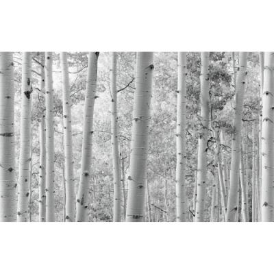 Photomural Espenholz Schwarz-Weiß | 450 x 280 cm