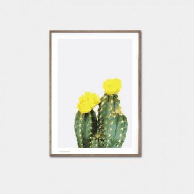Opuntia Kaktus Poster