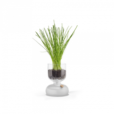 Gaia Self-watering Plant Glass   Small