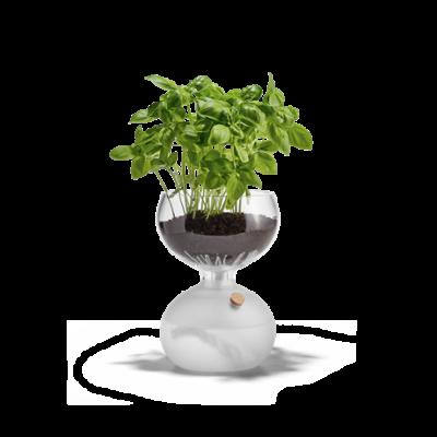 Gaia Self-watering Plant Glass   Medium