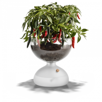 Gaia Self-watering Plant Glass   Large
