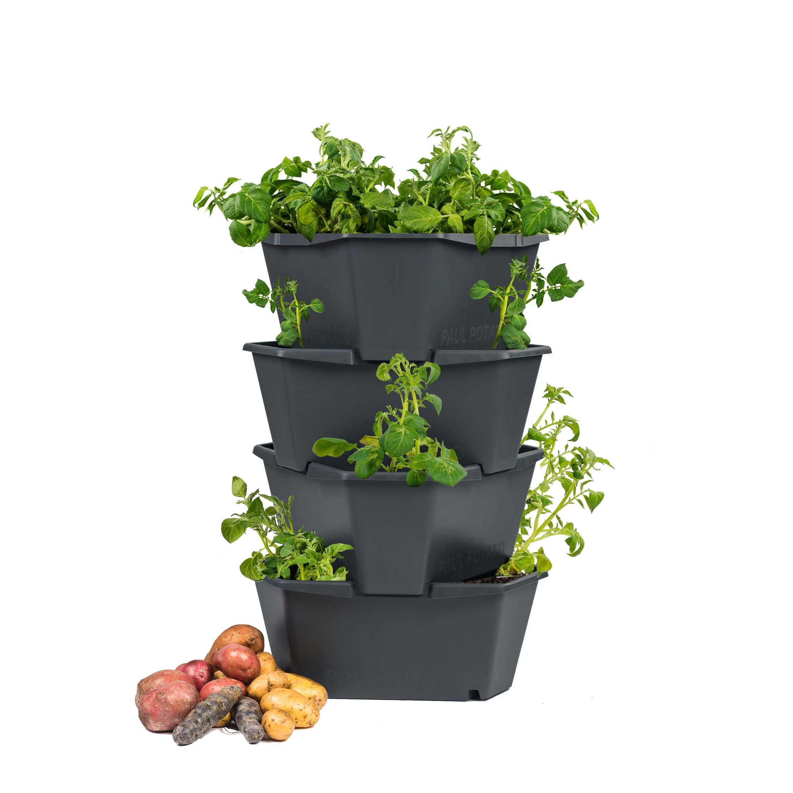 Kartoffelturm Starter 4 Ebenen PAUL POTATO | Anthrazit