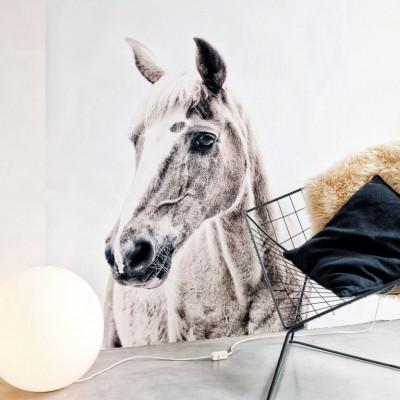 Magnettapete - Pferd