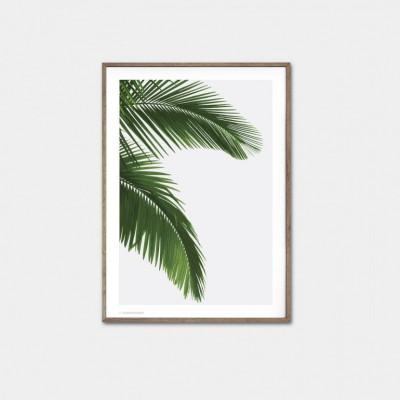 Palmen-Poster