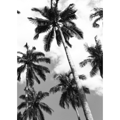 Poster | Palm II