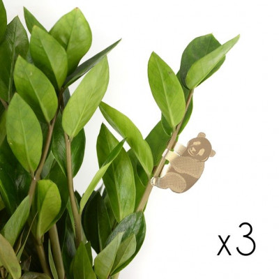 Plant Animals Set of Three | Panda / Racoon / Sloth