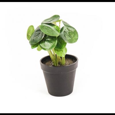 HV Pflanze - Pilea   11x15x25cm