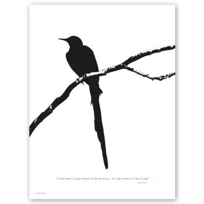 A Bird Print