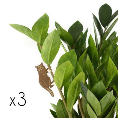 Plant Animals Set of Three | Chameleon / Panda / Racoon