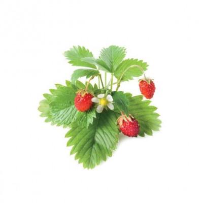 Refill 3-Pack   Wild Strawberry