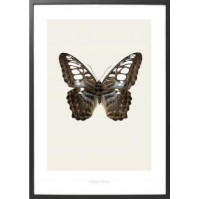 Art-Print Butterfly S11