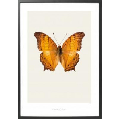 Art-Print Butterfly S12