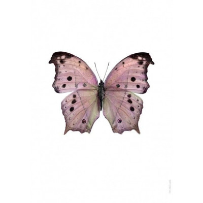 Poster | Salamis Parhassus, Pink
