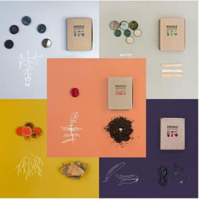 Colour Bouquet of Seeds