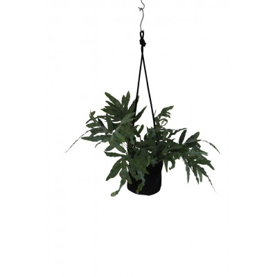 Single Flower Pot | Black