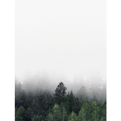 Poster | Foggy Forest