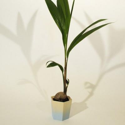 Sechseckiger Pflanzentopf   Klein