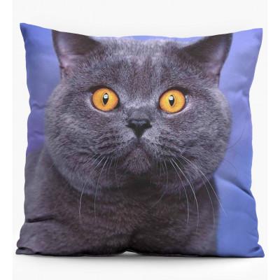 Pillow   British Cat
