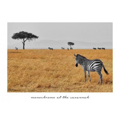 Gerahmte Leinwand | Zebrabeobachtung