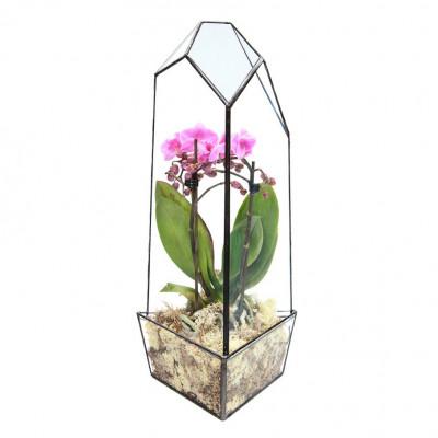 Supergroßes Azteken-Orchideenhaus-Terrarium