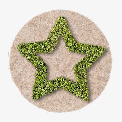 Pflanzensaatgut LEAFLING   Star
