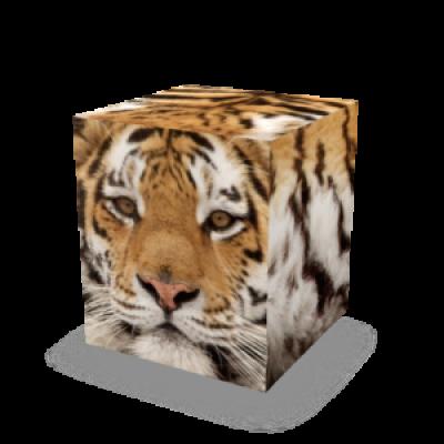 Auf allem Würfel sitzen | Tiger