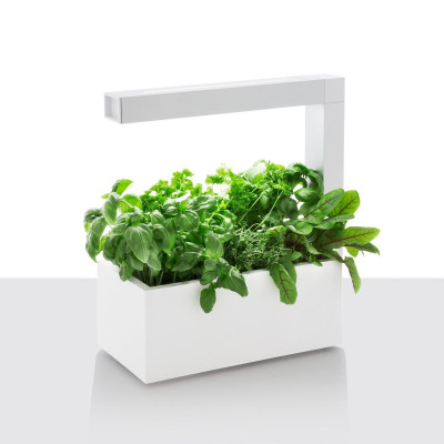Herbie | White (+ double Coriander seeds pack)