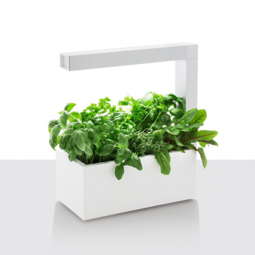 Herbie   White (+ double Coriander seeds pack)