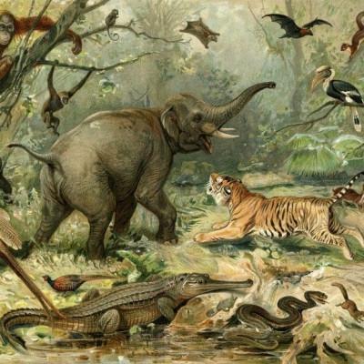 Wallpaper Vintage Animal | Original