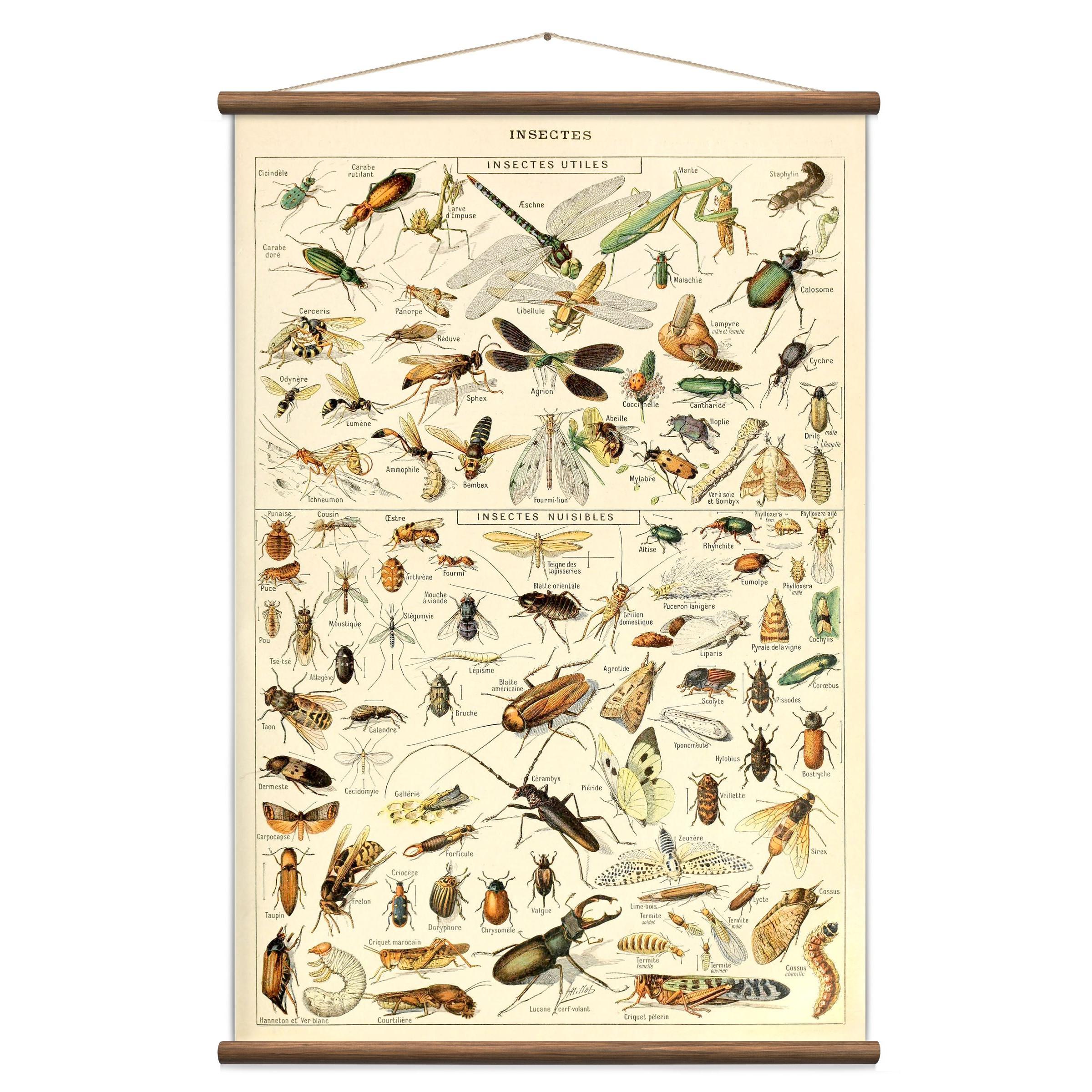 Vintage Poster Insekten