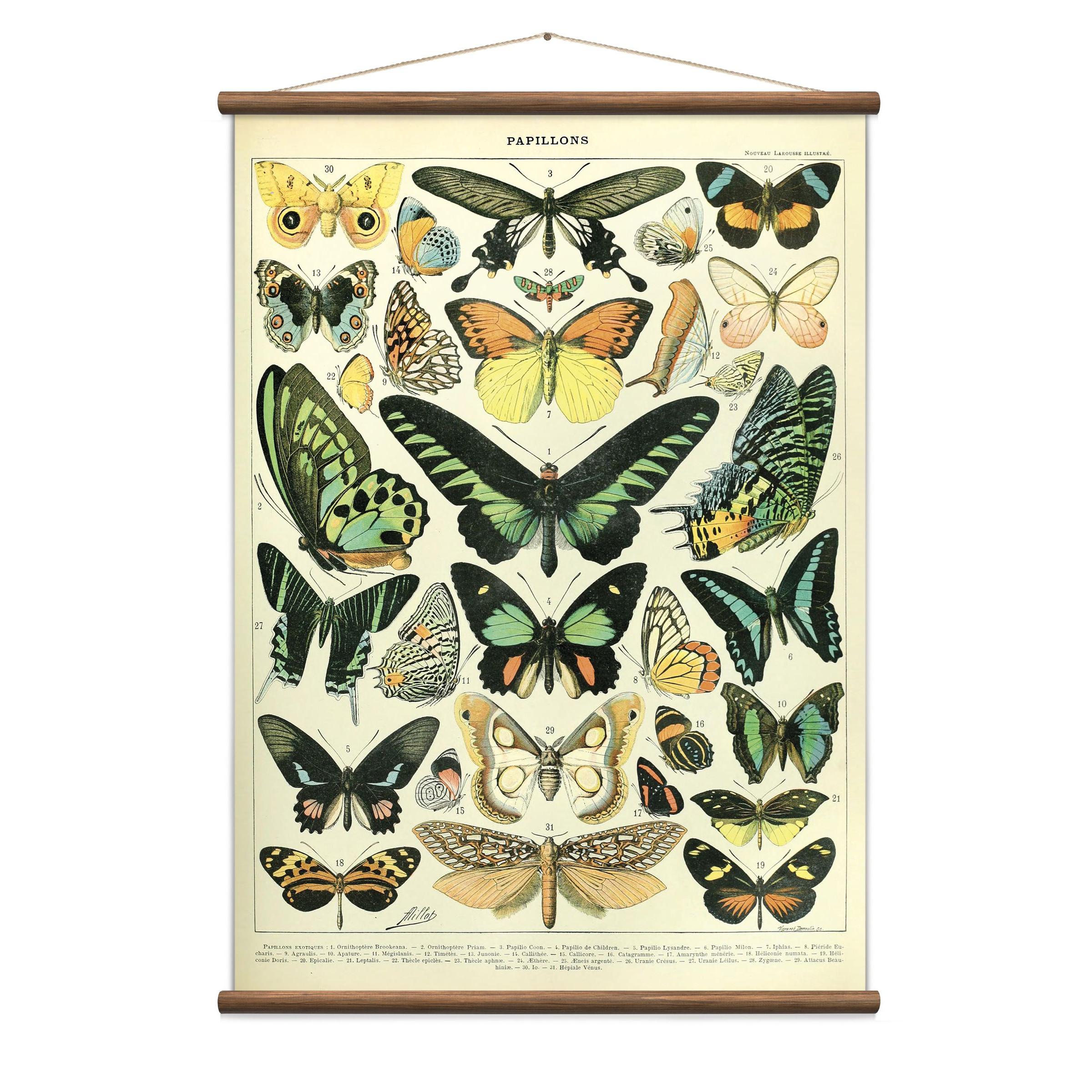 Vintage Poster Schmetterlinge