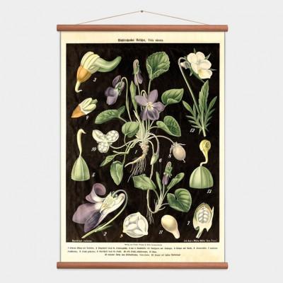 Vintage Poster Veilchen