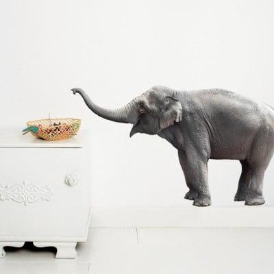 Wandsticker Safari-Freunde | Elefant