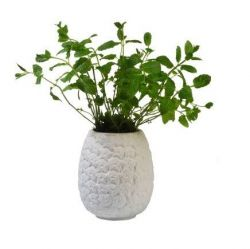 Pineapple Planter | White