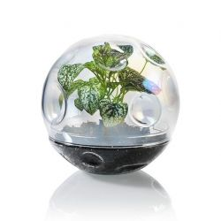 Terrarium Moon | Glass