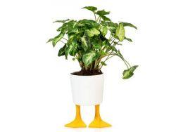 Blumentopf Entenfüße | Gelb