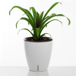 Self-watering Plant Pot Tulip | White