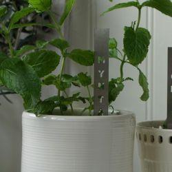 Herb Stick | Mynta