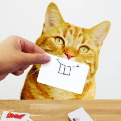 Cats Snap Cartes-Photos | 25 Dessins