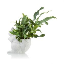 Planter Squirrel | White