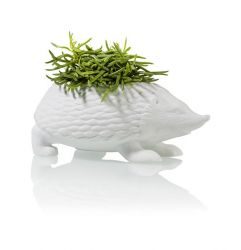 Planter Hedgehog | White