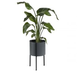 Plant Holder Delphine Low