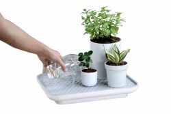 Self-watering Plant Tray Oasis | White